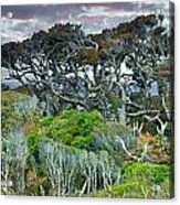 Dinosaur Trees Acrylic Print