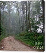 Dirt Path In Forest Woods With Mist Acrylic Print