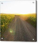Dirt Road In Field Of Flowers Acrylic Print
