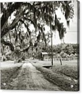 Dirt Road On Coosaw Plantation Acrylic Print