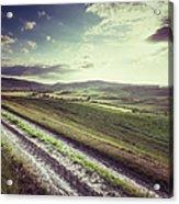Dirt Track In Tuscany Acrylic Print