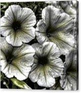 Dirty Flowers 2 Acrylic Print