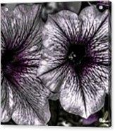 Dirty Flowers 4 Acrylic Print