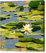 Dirty Monet Acrylic Print