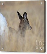 Disappearing Act Acrylic Print