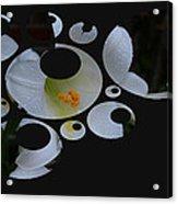Disgruntled Lilly Acrylic Print