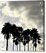 Disney's Epcot Palm Trees Acrylic Print