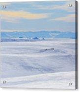Distant View Of A Musk Ox And Snow Acrylic Print