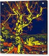 Dried Up Tree Acrylic Print