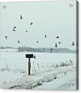 Disturbing The Winter Foragers Acrylic Print
