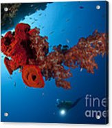 Diver Looks On At A Bright Red Soft Acrylic Print