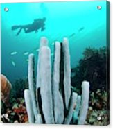 Diver Swimming Over A Tube Sponge Acrylic Print