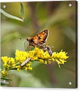 Diversity - Insects Acrylic Print