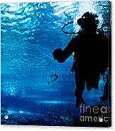 Diving In The Ocean Underwater Acrylic Print