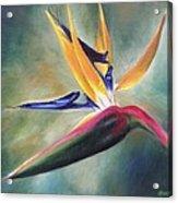 Dj's Flower Acrylic Print