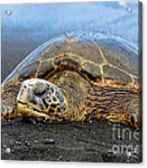 Do Not Disturb Acrylic Print