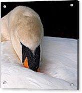 Do Not Disturb - Swan On Nest Acrylic Print