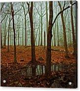 Do We Dare Go Into The Woods Acrylic Print by Karol Livote