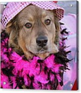 Do You Like My Pink Hat Acrylic Print