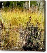 Do You See It Acrylic Print