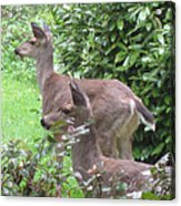 Do You See What I See Acrylic Print