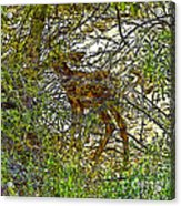 Do You See What I See? Acrylic Print