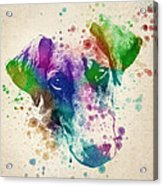 Doberman Splash Acrylic Print