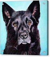 Does This Include Me Black Dog Acrylic Print