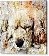 Dog 391-08-13 Marucii Acrylic Print
