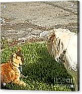 Dog And Cat Discuss Acrylic Print by Artist and Photographer Laura Wrede