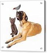 Dog And Cat Looking At A Bird Acrylic Print by Susan Schmitz