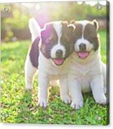 Dog And Puppies Acrylic Print