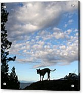 Dog And Sky Acrylic Print
