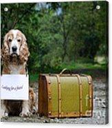 Dog And Suitcase Acrylic Print