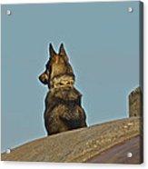 Dog At Point Bonita Acrylic Print