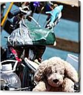 Dog Bike Acrylic Print