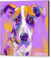 Dog Charlie Acrylic Print