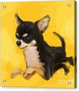 Dog Chihuahua Yellow Splash Acrylic Print