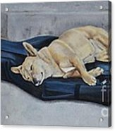 Dog Day Afternoon Acrylic Print