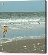 Dog Day Beach Acrylic Print