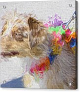 Dog Daze 5 Acrylic Print