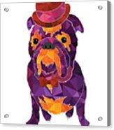 Dog Gentleman Acrylic Print