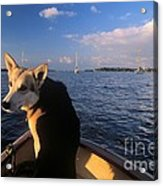 Dog In A Dingy At Put-in-bay Harbor Acrylic Print