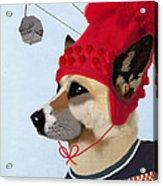 Dog In A Ski Jumper Acrylic Print