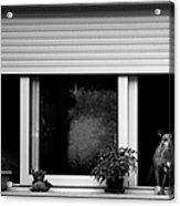 Dog In A Window Acrylic Print by Fabrizio Troiani