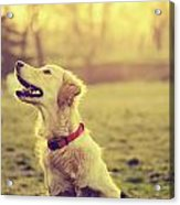 Dog In The Park Acrylic Print by Jelena Jovanovic