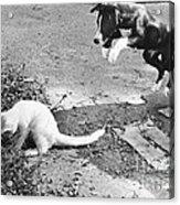Dog Jumping On An Unsuspecting Kitten Acrylic Print