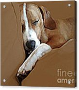 Dog - Mr. Oliver Snoozing Acrylic Print