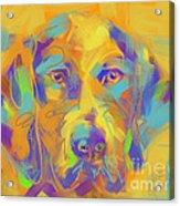 Dog Noor Acrylic Print