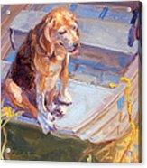 Dog On Boat Acrylic Print